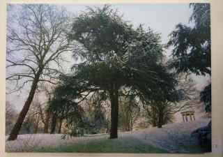 Colin Ember - Kew